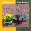 The Flowers the Mongolian Gobi Desert